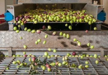 Agriculture et maraîchage en Grèce