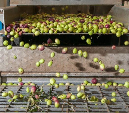 Fabrique d'huile d'olives en Grèce