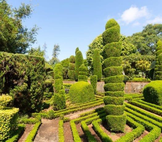Jardin botanique à Madère