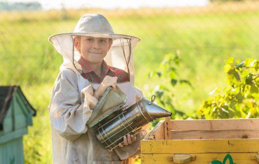 Exploitation apicole à Karlovac