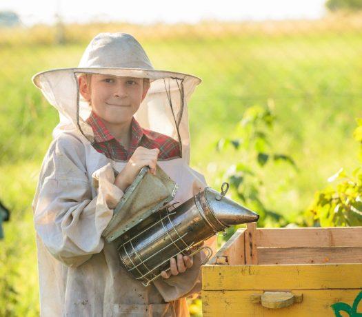 Croatie exploitation apicole
