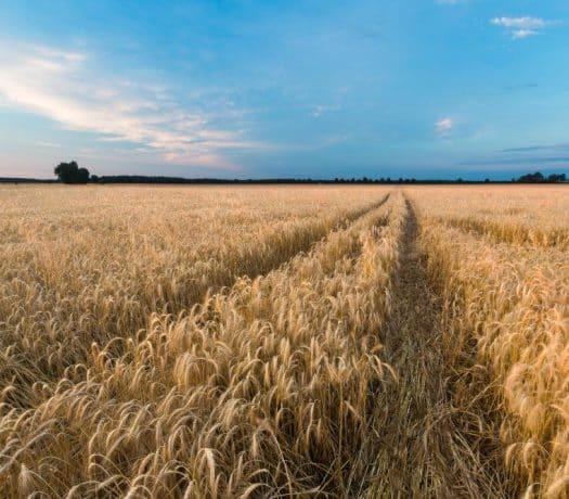 Exploitation agricole en Pologne
