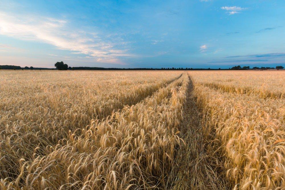 L 39 agriculture c r ali re en pologne pologne desti nations for L agriculture