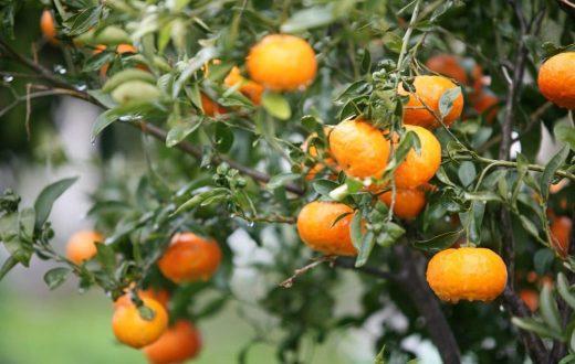 Sur la route de l'orange en Espagne