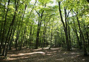 Les forêts de Roumanie