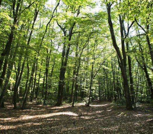 Forêts de Roumanie