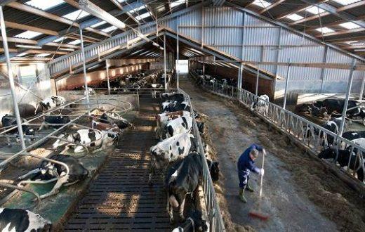 Exploitation laitière et exploitation céréalière (Irlande)