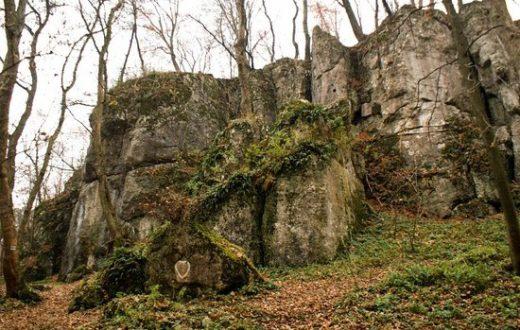 Course d'orientation dans la forêt de Wola (Cracovie)