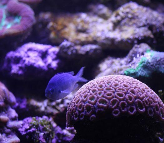 Poisson tropical - Sea Life Aquarium