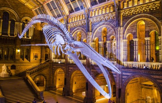 Natural History Museum(Londres)