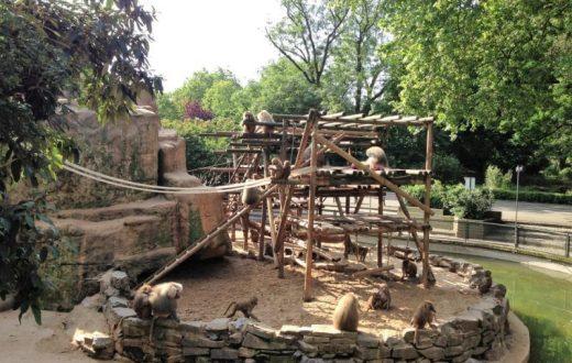 Le Zoo de Cologne