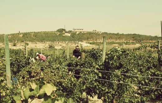 Domaine et entreprise vinicole Papayannakou
