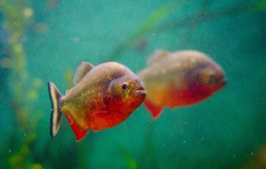 L'Aquarium de Saragosse