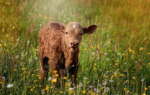 Visite d'un élevage de taureaux à Alba de Tormes