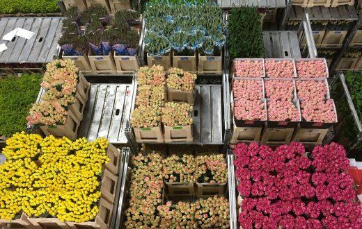La bourse aux fleurs d'Aalsmeer