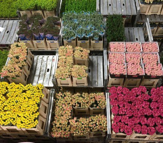 Aalsmer - enchères de fleurs