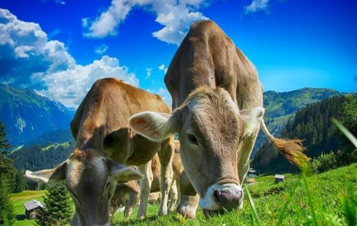Agriculture bio en Forêt-Noire
