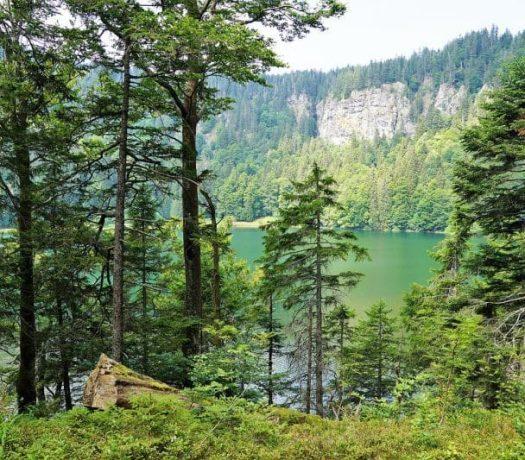 Forêt-Noire - paysage