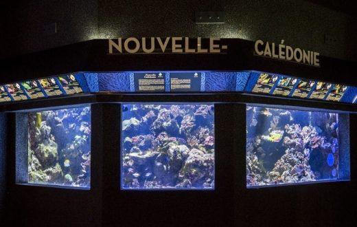 L'Aquarium tropical au Palais de la Porte dorée