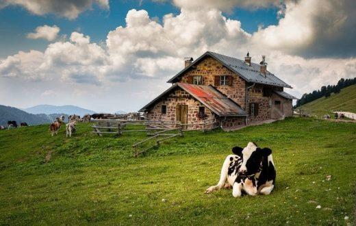 Ferme en agriculture biologique à Aldrans (Tyrol)