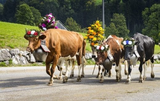 Fête de la Transhumance au Tyrol