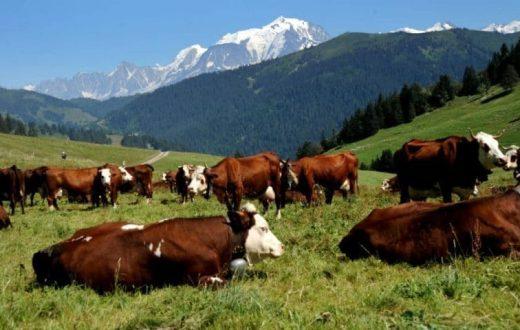 Ferme de bovins au Tyrol