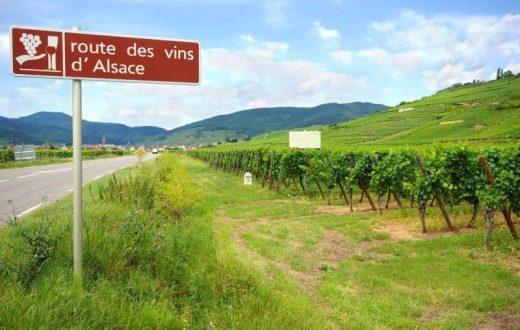 Visite d'une cave à vins en Alsace