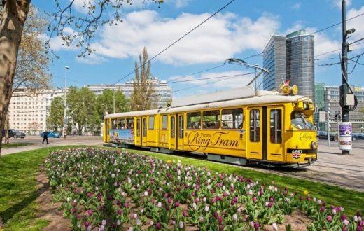 Tour panoramique en tramway / à pied du boulevard Ring